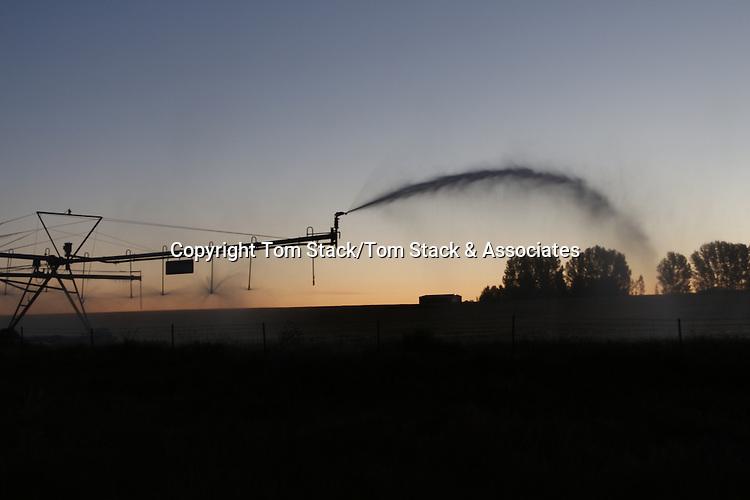 Irrigation sprinkler at dawn, Idaho
