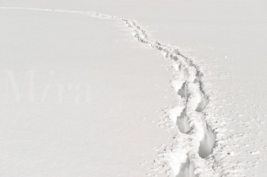 Foot path through deep snow.