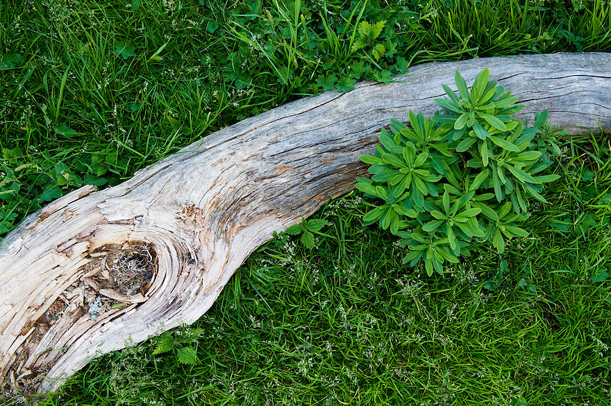 Vegetation beside dead wood at &quot;Sleme&quot;<br /> Julian Alps<br /> Triglav National Park, Slovenia<br /> July 2009