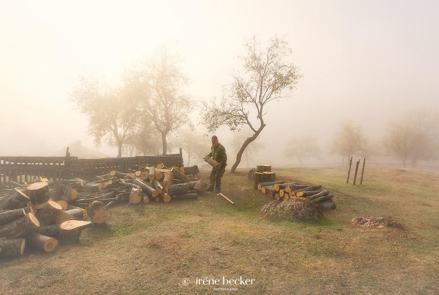 Collecting firewood. Zaovine, Tara National Park, Serbia.