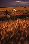 A man mountain biking the Continental Divide Trail near Driggs, ID.