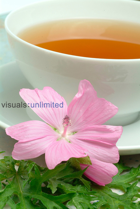 Tea made from Musk Mallow (Malva moschata)