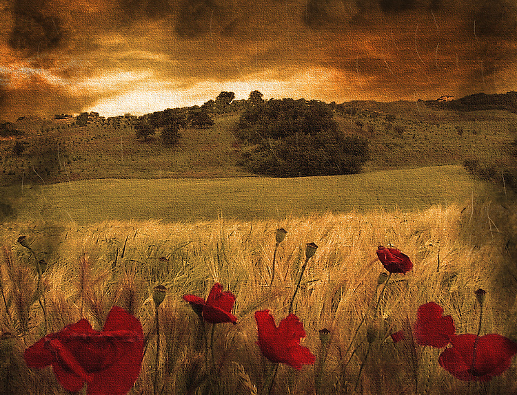 Italian countryside with red poppies and rolling hillside