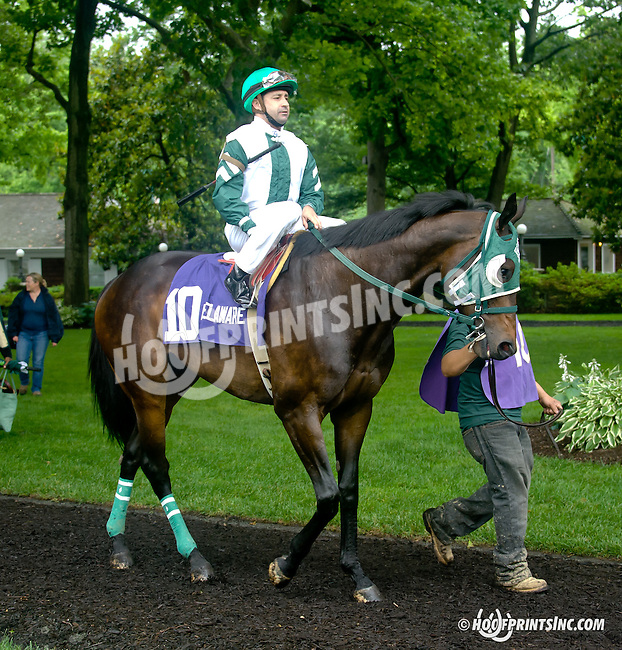 Geeky Gorgeous before The Dashing Beauty Stakes at Delaware Park racetrack on 6/12/14