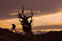 Sierras and Yosemite Hiking
