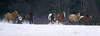 Group of horses running through a snowy field