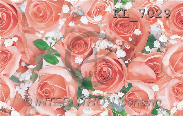 Interlitho, Erica, GIFT WRAPS, paintings, red roses(KL7029,#GP#) everyday