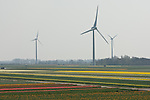 Three wind turbines provide a backdrop to a field of tulips and flowers in North Holland.