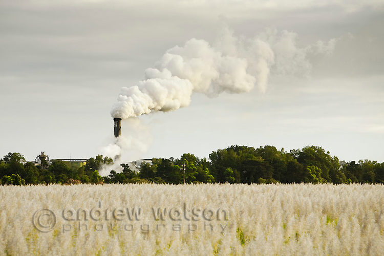 View across sugar cane field to smoke stack of the Mulgrave Sugar Mill.  Gordonvale, Queensland, Australia
