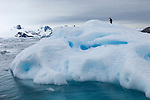 An Adelie penguin on an iceberg near Peterman Island, Antarctic Peninsula.