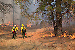 Prescribed fire in ponderosa pine forest in fall on Sinlahekin Wildlife Area in Okanogan County, WA..Treatment unit is Conner 5, which had been logged and thinned in winter prior.