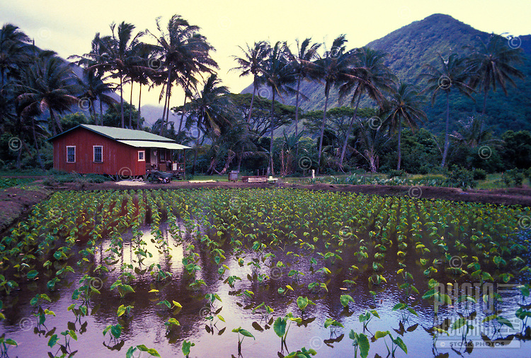 Waipio Valley taro patch and dwelling, Big Island