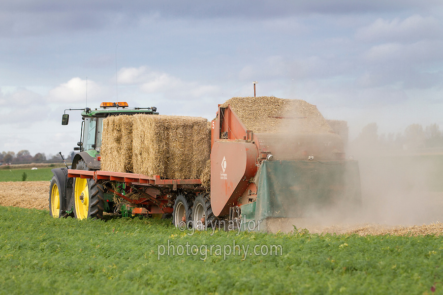 Spreading wheat straw onto carrot beds with a Richard Larrington straw spreader - November, Lincolnshire