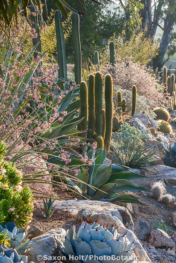 Front garden drought tolerant entry succulent border on slope with cactus and California native plants using rocks and gravel for good drainage; Patrick Anderson San Diego Garden