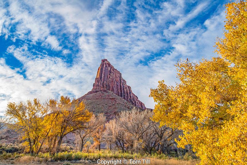 Sundial Peak and fall cottonwoods, Nature Conservancy Dugout Ranch, Utah  Indian Creek, Near Canyonlands National Park