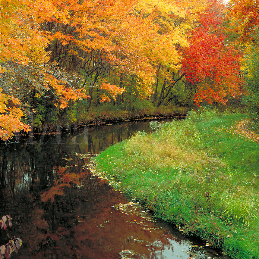 Scenic autumn landscape of a stream and fall foliage in the Massappequa Preserve. New York.