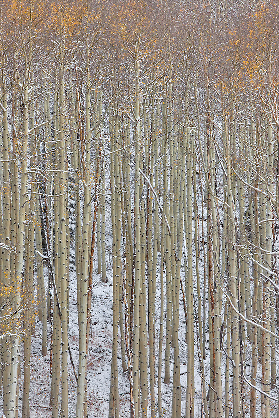 In the Maroon Bells Wilderness, I captured this Colorado Image as snow was falling on the Aspen trees near Maroon Lake. Everything was quiet, and I drifted away from the throngs of photographers attempting to photograph the Bells (the mountain peaks were covered in clouds by this point). Just a short distance away from the bells I found solitude and beauty, as evidenced in this Colorado picture.