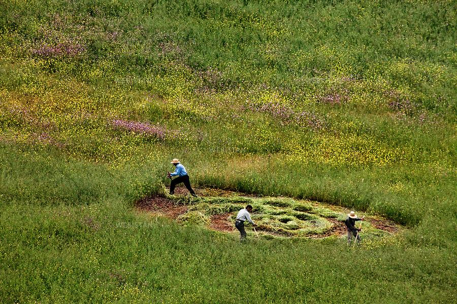 Azerbaijan, Lerik District, June 1, 2011<br /> Farmers work in the fields to prepare the land for cultivation. The tilled land forms swirling patterns in the grass. The spiral expands as the men work together in synchronized movements. Lerik is a district in southern part of Azerbaijan, near the Iranian border. This mountainous area has earned a reputation as the &ldquo;home of people who live to a great age.&rdquo;<br /> <br /> Azerba&iuml;djan, district de Lerik, 1er juin 2011<br /> Les agriculteurs travaillent dans les champs pour pr&eacute;parer la terre &agrave; la culture. Les champs labour&eacute;s forment des tourbillons dans l&rsquo;herbe. Plus les hommes travaillent ensemble, avec des mouvements synchronis&eacute;s, plus la spirale grandit. Situ&eacute; pr&egrave;s de la fronti&egrave;re iranienne dans le sud de l&rsquo;Azerba&iuml;djan, ce district montagneux est connu comme &eacute;tant &laquo; la terre de ceux qui vivent &acirc;g&eacute;s &raquo;.