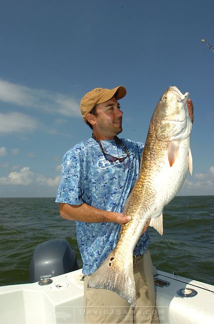 OFFSHORE FISHING.Peter Angle  shows a red drum. he was  fishing with Capt. Peace Marvel...Venice, Louisiana