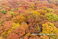 63876-02413 Aerial view of fall color trees Stephen A. Forbes State Park Marion Co. IL