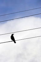 Bird on a Wire<br />