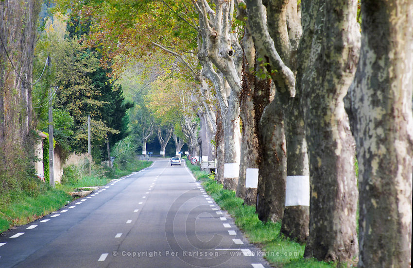 A tree lined country road allee with plane trees platanes and a car in the distance. Bouches du Rhone, France Europe
