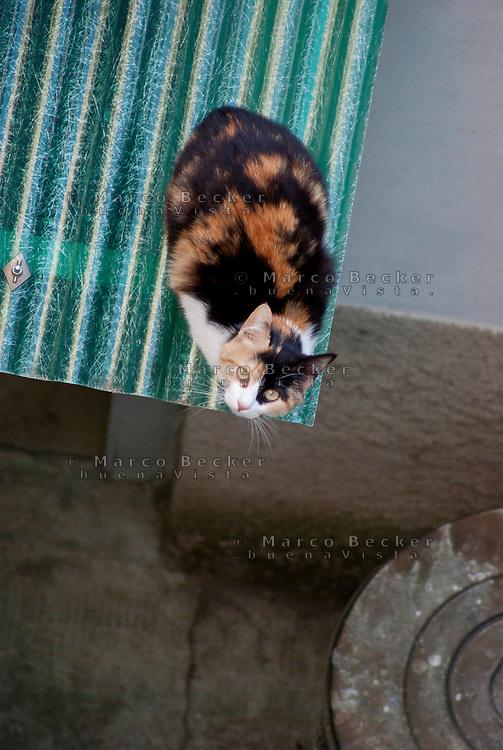 Milano, un gatto in un cortile di periferia --- Milan, a cat in a backyard in the periphery