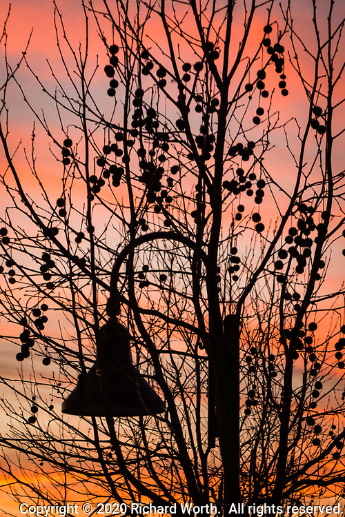 Branches with seed pods and an overhead lamp in silhouette with sunset's glow providing backlight - shapes along a city park path.