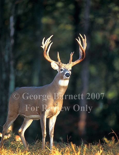 Level A Image - Reserved for Editorial Cover or Commercial Applications. Contact George Barnett Photography for other Possible Publication Rights..Image Previously Published as Editorial Cover - Blackpowder Hunting 2004