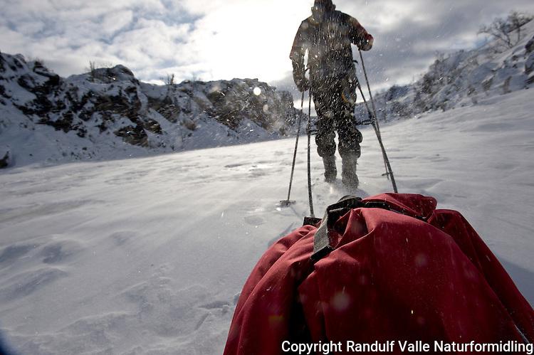 Mann trekker pulk. ---- Man pulling sled.