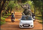 Free elephants roaming around Auroville, Tamil Nadu, India