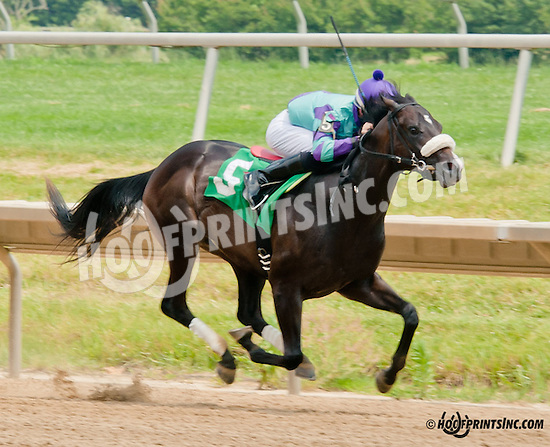 Theoryofrelativity winning at Delaware Park on 6/24/13