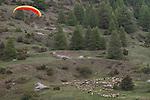 Parapente dans la vall&eacute;e d'Arvieux. Attention aux moutons !<br /> Paragliding in Arvieux valley. Beaware of the sheeps!