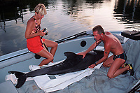 biologist Chris Blankenship of Dolphins Plus checks the heart rate of a stranded pygmy killer whale, Feresa attenuata, before release, Florida