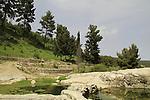 Israel, Upper Galilee, Ein Navoraya in Biria forest