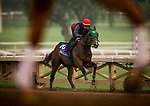 ARCADIA, CA - APRIL 01: Bolt d'Oro with Agapito Delgadillo up complete their final workout for the Santa Anita Derby at Santa Anita Park on April 01, 2018 in Arcadia, California. (Photo by Alex Evers/Eclipse Sportswire/Getty Images)