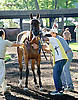Special P before The Delaware Park Arabian Juvenile Championship (grade 3) at Delaware Park on 9/27/14