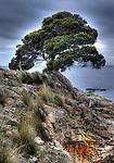 Kingscote Kangaroo Island has a massive  fully grown Bonsai beside the ocean