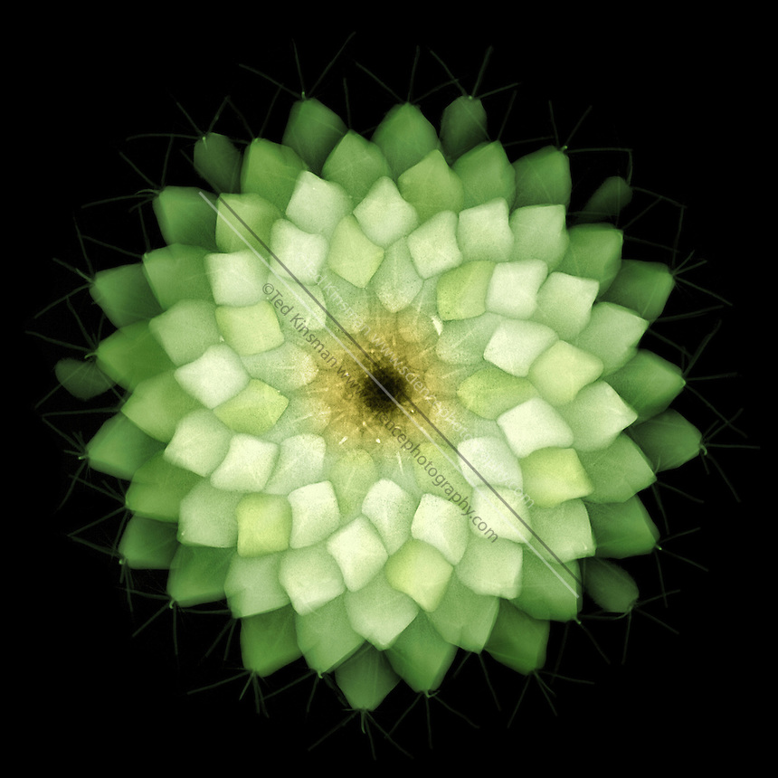 An X-ray of a cactus.