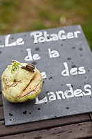 Europe/France/Bretagne/56/Morbihan/La Gacilly: Potager biologique  du Restaurant: La Grée des Landes, Eco-Hôtel Spa Yves Rocher [Non destiné à un usage publicitaire - Not intended for an advertising use]