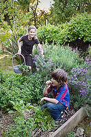 Children harvesting herbs in garden, oregano, rosemary, lavender, sorrel