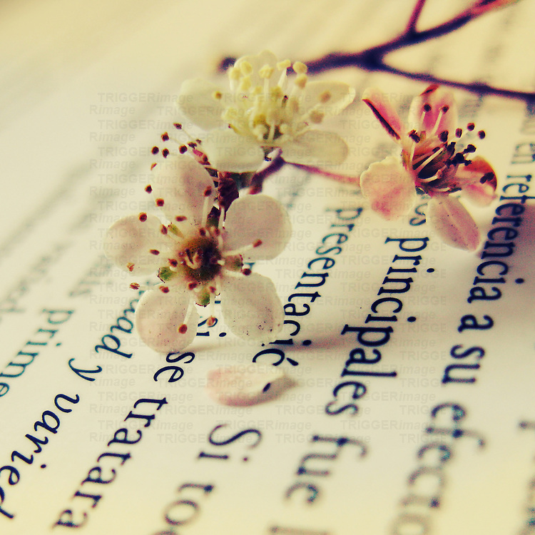 Close up of some little white flowers over a book