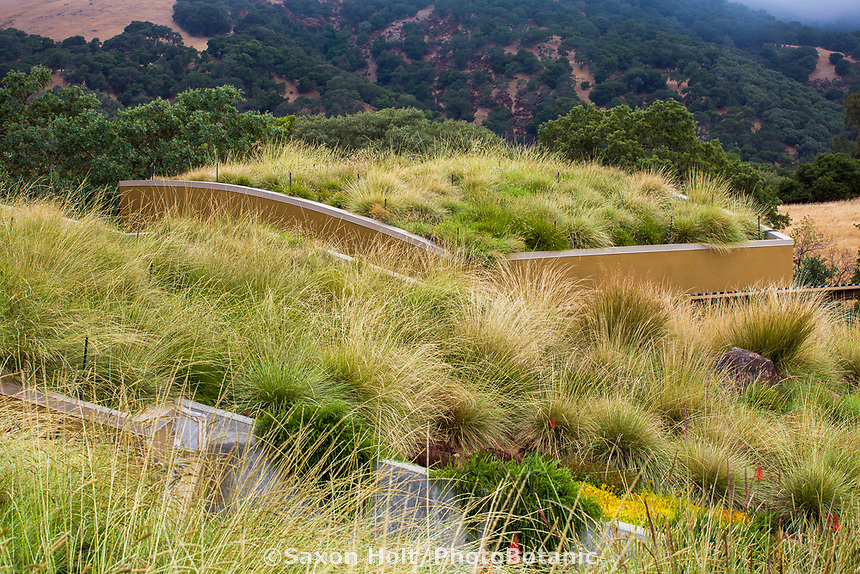 Grass meadow green roof garden for California home with fescue, veldt grass, and brome.