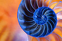 The chambered nautilus, one of the oldest life forms on earth, is the epitome of the equiangular spiral. It also incorporates the Golden Mean. Pythagorus calculated that shapes whose sides have a ratio of 1:618 were the most pleasing of all. Fibonacci later expressed the ratio as a progression of prime numbers. (SPIRALS - EQUIANGULAR)