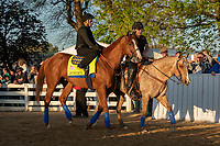 LOUISVILLE, KY - MAY 1: Justify, trained by Bob Baffert, exercises in preparation for the Kentucky Derby at Churchill Downs on May 1, 2018 in Louisville, Kentucky. (Photo by Eric Patterson/Eclipse Sportswire/Getty Images)