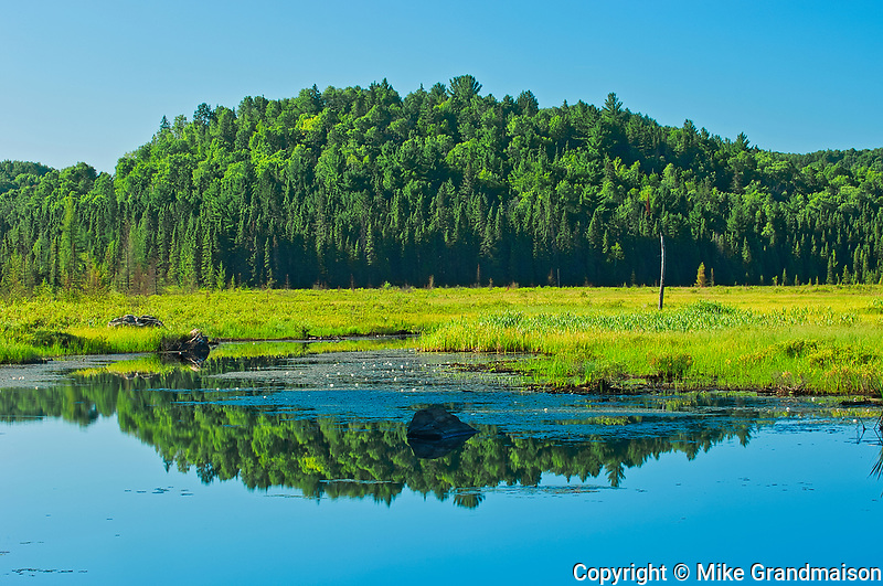 Reflection of boreal forest in wetland<br />Algonquin Provincial Park<br />Ontario<br />Canada