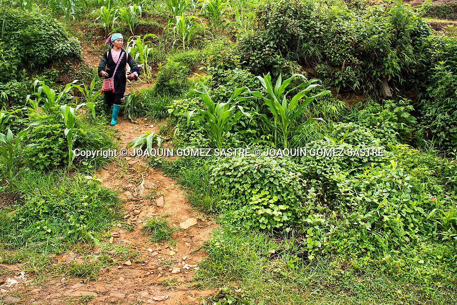 A woman of the Hmong ethnic group goes down a road in the rural area of Sa Pa in the north of Vietnam<br /> SA PA - VIETNAM