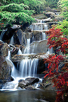 Waterfall, late afternoon, autumn, Sino-Himalayan section of Van Dusen Botanical Garden, Vancouver, BC