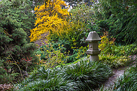 Stone japanese lantern in San Francisco Botanical Garden in autumn
