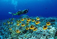 Divers, Hawaii
